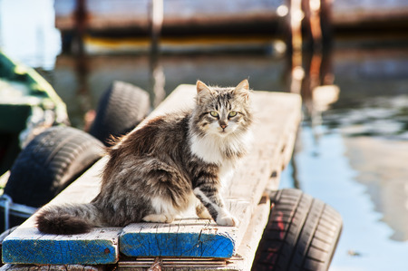 longhaired: Long-haired wild cat sitting on a jetty
