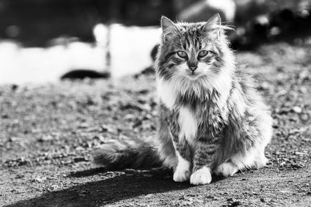 long haired: Long haired wild cat sitting Stock Photo