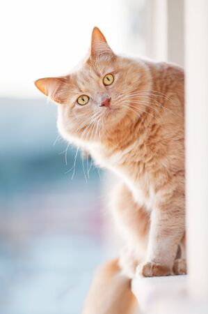 curiously: Cat looks curiously Stock Photo