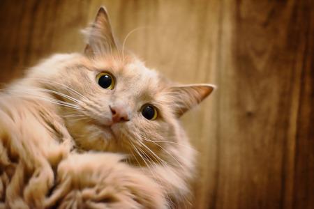 Cat gets a selfie