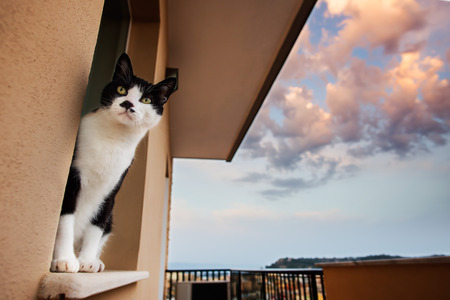 Cat looking behind a window at the sunset photo