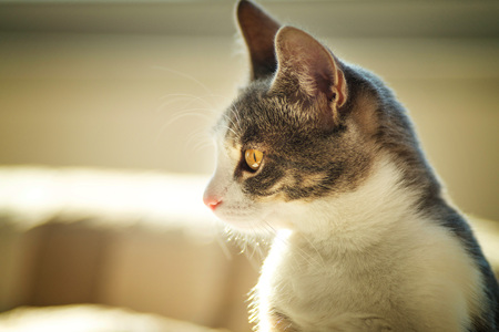 curiously: Cat looking curiously Stock Photo