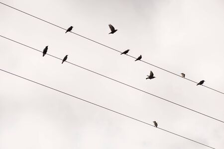 birds on a wire: Birds on the wire  of electricity