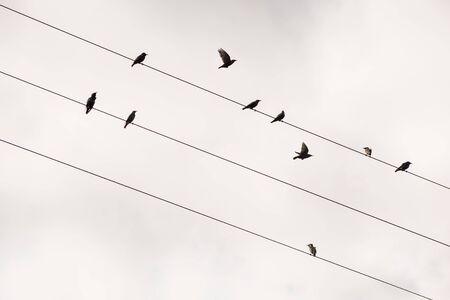 Einzel Krähe Vogel Auf Telefon-Draht Lizenzfreie Fotos, Bilder Und ...