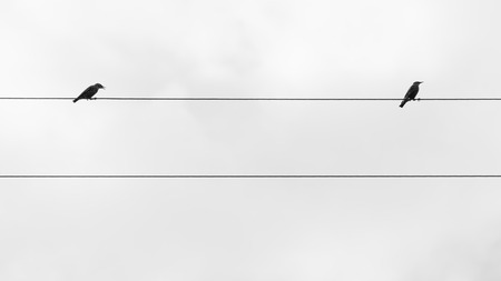 birds on a wire: Two birds on the wire  of electricity Stock Photo