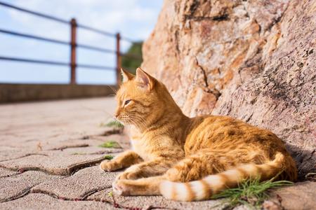 brindle: Honey brindle cat who enjoys the sun outdoors