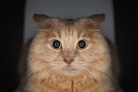 hypnotize: Cat with wide eyes  to hypnotize