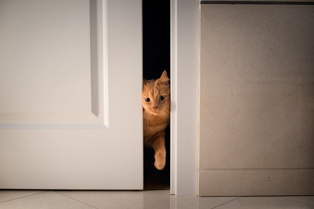 ajar: Cat open and entering into a door Stock Photo