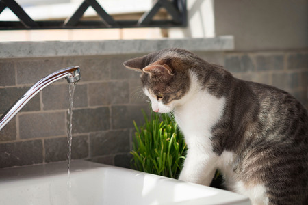 cats eyes: Tabby cat watching the water from the tap