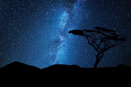 milkyway: Tree silhouette under a sky full of stars