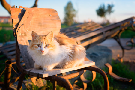 curiously: Female stray cat  over a bench watching curiously at sunset Stock Photo