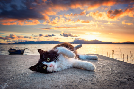 Black and white cat lying under a dramatic sunset on the lagoon
