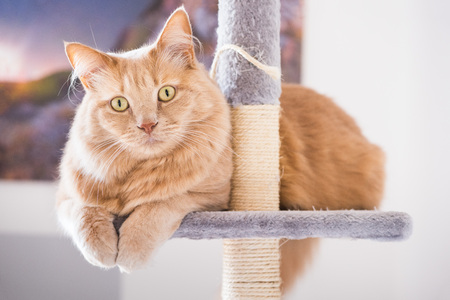 Cat looking curiously in the scratching post Stockfoto
