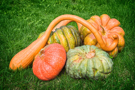 Different varieties of pumpkins in the grass Stock Photo