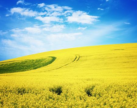 Field of Yellow Daisy Stock Photo