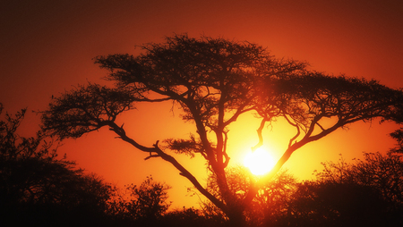 African tree red sunser Reklamní fotografie
