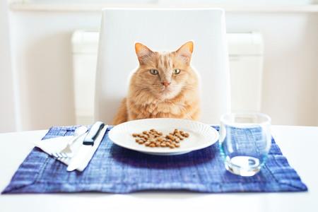 Katze sitzt vorne auf einem Tisch wie ein Mensch mit seinem Lieblingstrockenfutter auf dem Teller Standard-Bild