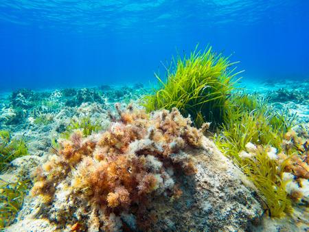 Underwater Mediterranean seascape
