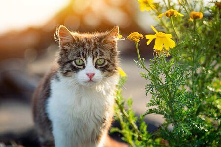 Stray kitten near yellow flowers at sunset. Stock Photo