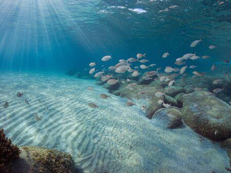 Fondale mediterraneo con sabbia, rocce e molti pesci sullo sfondo. Mare del sud Sardegna.