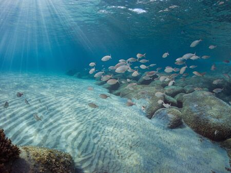 Fondo del mar Mediterráneo con arena, rocas y muchos peces de fondo. Mar del sur de Cerdeña.