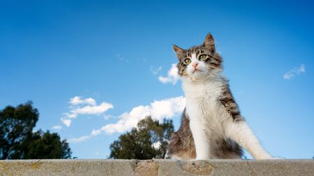 Kitten with blue sky background and left copyspace. Banco de Imagens - 132089766