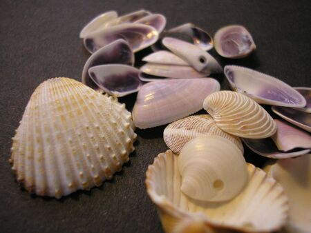 mussle: Shells