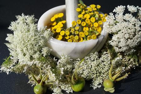 Alternative medicine with pharmaceutical herbs Фото со стока