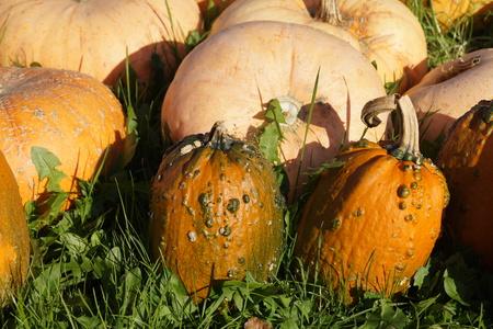 Pumpkins on a Market 免版税图像