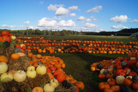 Pumpkins on a Market Zdjęcie Seryjne