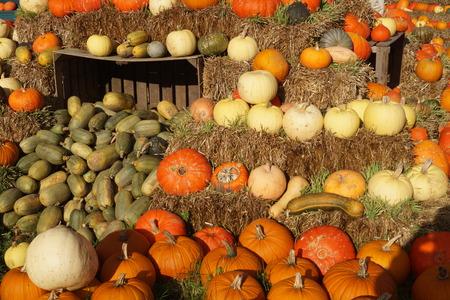 Pumpkins on a Market Standard-Bild