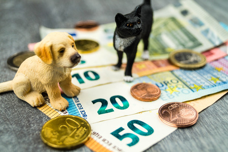 Costs of a pet concept photo