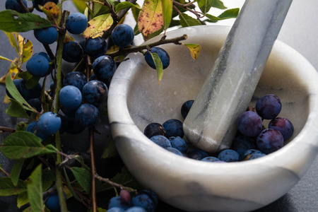 The blackthorn berry prunus spinosa Stock Photo