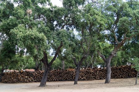 Bark of portuguese cork oaks