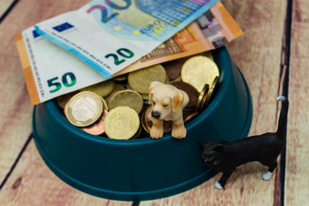 What are the costs of a pet