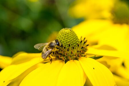 Gli insetti raccolgono il polline in giardino Archivio Fotografico