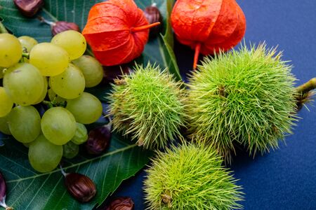 The fruits of the prickly chestnut are ripe in autumn