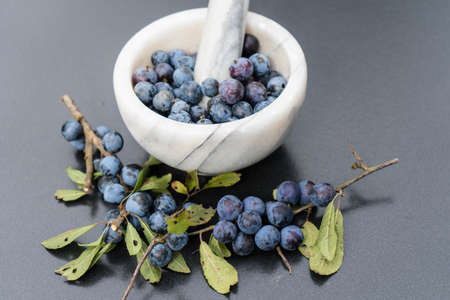 blue round fruits of the blackthorn bush