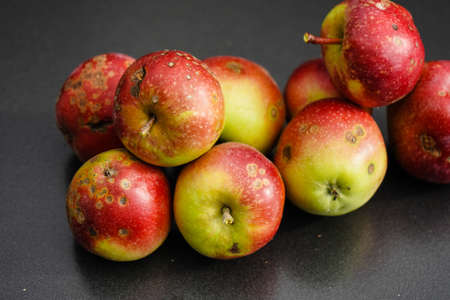 a stack of apples with apple scab disease