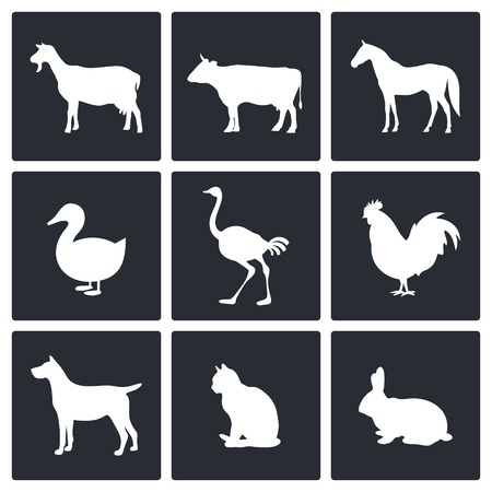 bunny rabbit: Pets icon set on a black background