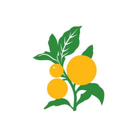 orange tree: Orange tree Illusstration Isolated on a white background Illustration