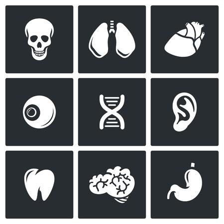 oreja: Vector Colección aislado planas iconos sobre un fondo negro para el diseño