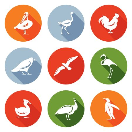 flamingi: Pelican, an ostrich, rooster crows, seagulls, flamingos, ducks, peacock, penguin. Isolated Flat Icons collection on a color background for design