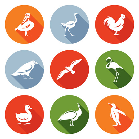 flamingos: Pelican, an ostrich, rooster crows, seagulls, flamingos, ducks, peacock, penguin. Isolated Flat Icons collection on a color background for design