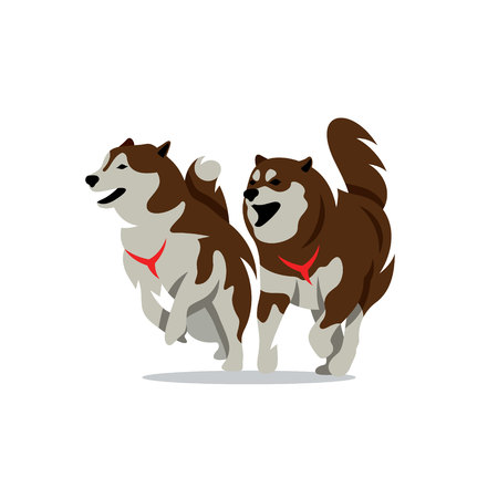 sled dogs: Siberian sled dogs Isolated on a White Background
