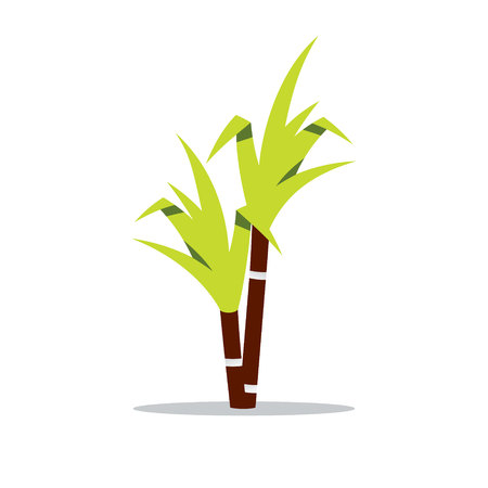 perennial: Perennial herbaceous tropical plant. Isolated on a white background Illustration