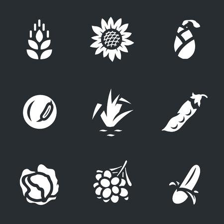 Vector Set of Harvest Icons. Ilustração