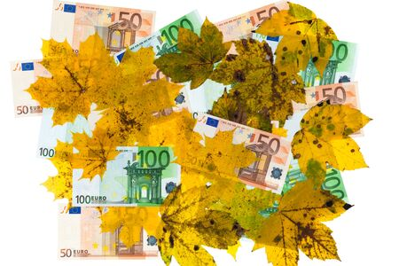 Banknotes and leaves as cutout Stock Photo - 15329674