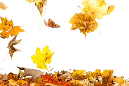 Studio photography of falling leaves