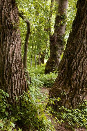 Hidden path through the dense forest Stock Photo - 15900237